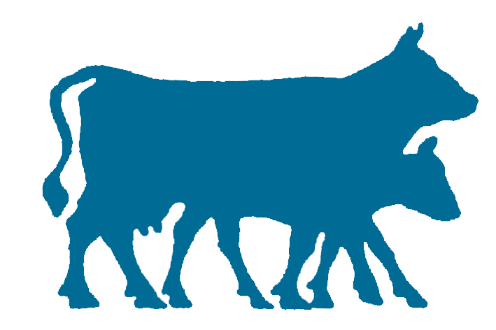 Vaches bleues droite